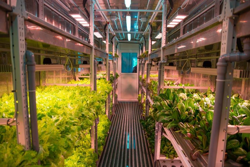 Аэропонная фабрика растений, способная производить 200-300 кг зелени в месяц на форуме «Армия – 2018»